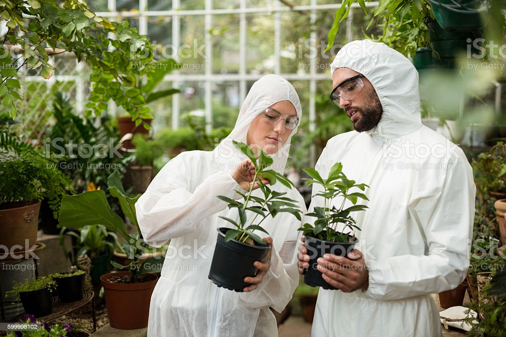 Scientists in clean suit examining potted plants stock photo