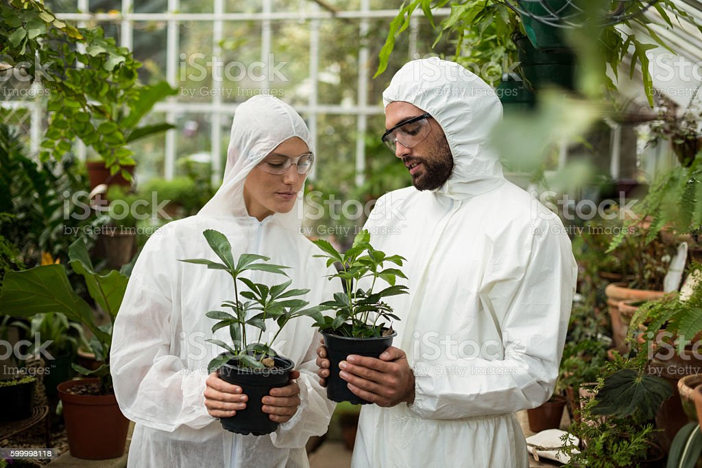 Scientists in clean suit holding potted plants stock photo