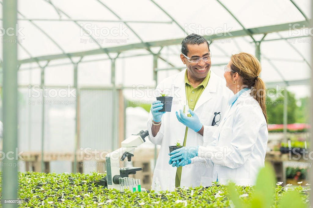 Scientists smiling at each other while working in a greenhouse stock photo