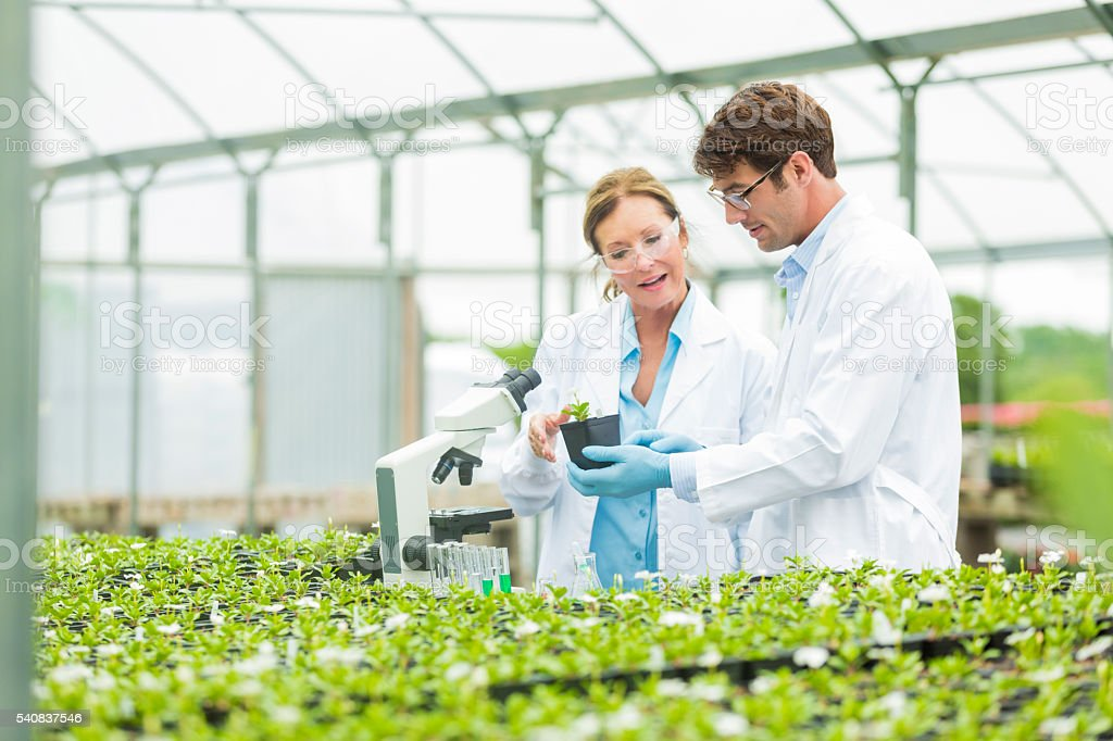 Scientists studying local plants stock photo