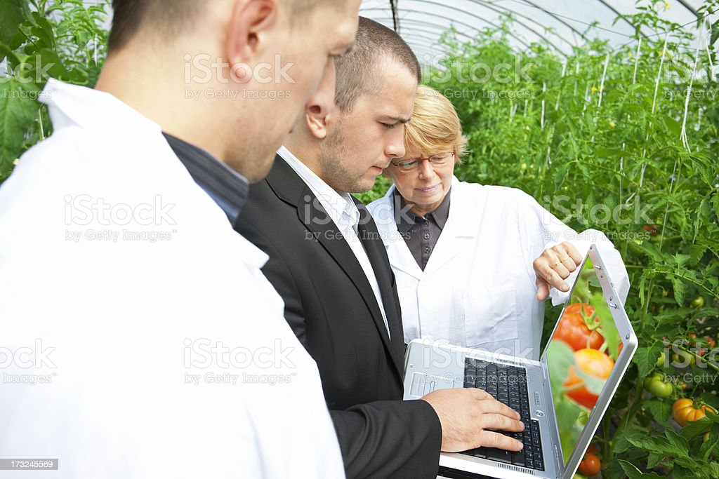 Scientists Team in Greenhouse royalty-free stock photo
