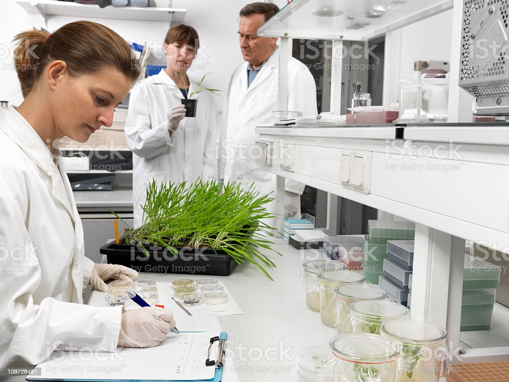 Scientists working in agriculture lab royalty-free stock photo