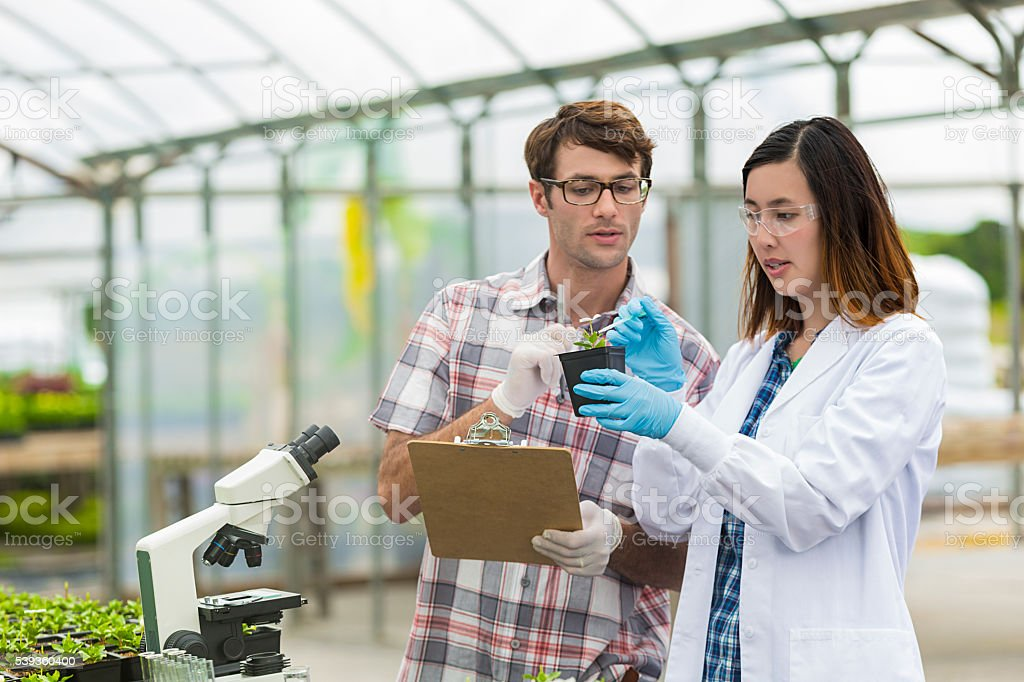 Scientists working together in a greenhouse stock photo
