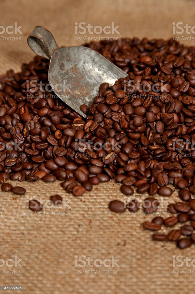 Scoop of Coffee Beans royalty-free stock photo