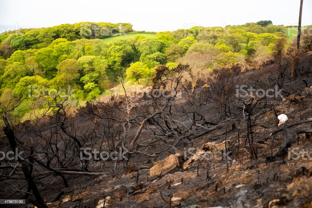 scorch land after brush fire stock photo