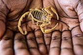 Scorpion in hands