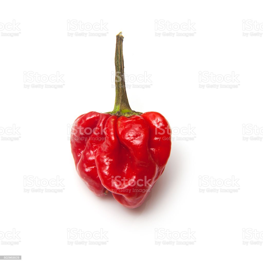 Scotch bonnet chili peppers stock photo