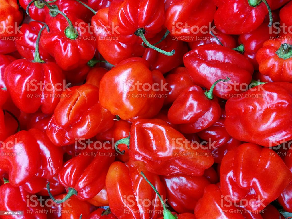 Scotch bonnet peppers stock photo