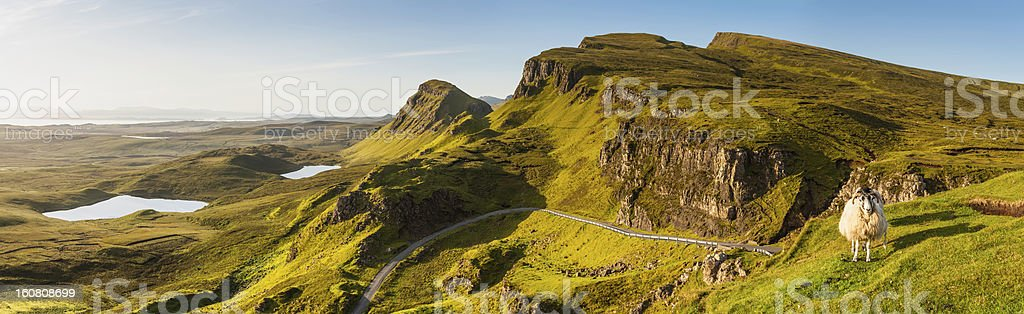 Scotland Highland sheep on picturesque mountain ridge Skye stock photo
