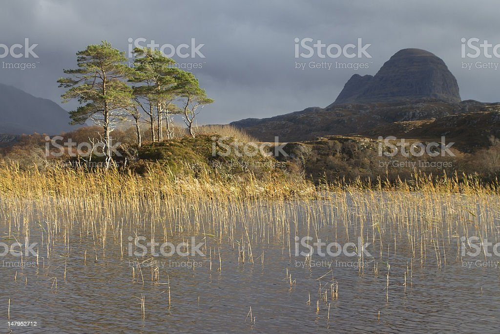 Scots Pines and Suilven stock photo