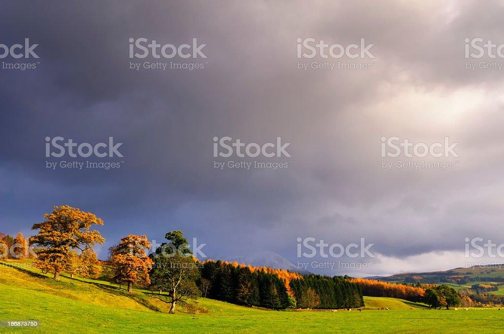 Scottish autumn trees stock photo