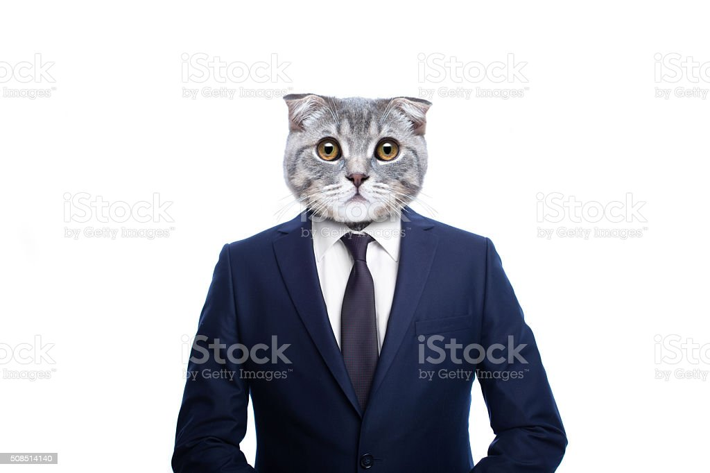 Scottish fold cat in a suit businessman stock photo