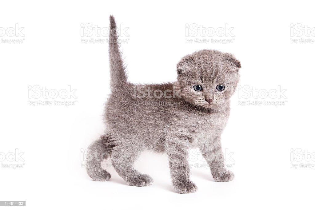 scottish pussy