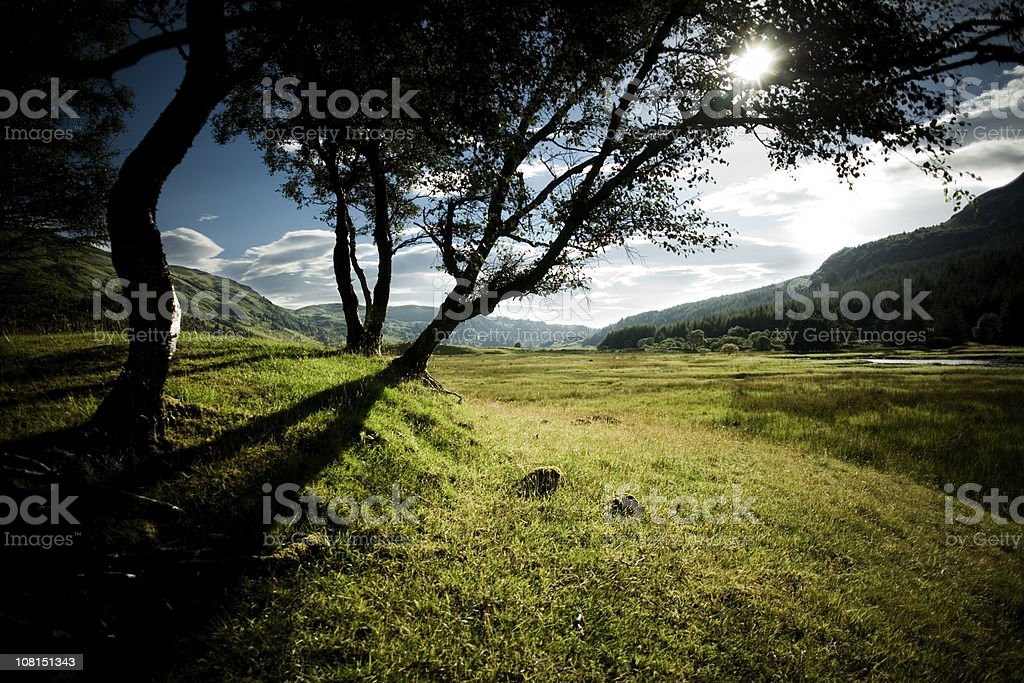 Scottish Green Valley with Group of Trees royalty-free stock photo