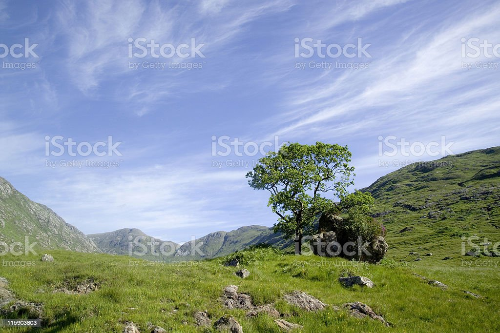 Scottish valley with tree royalty-free stock photo