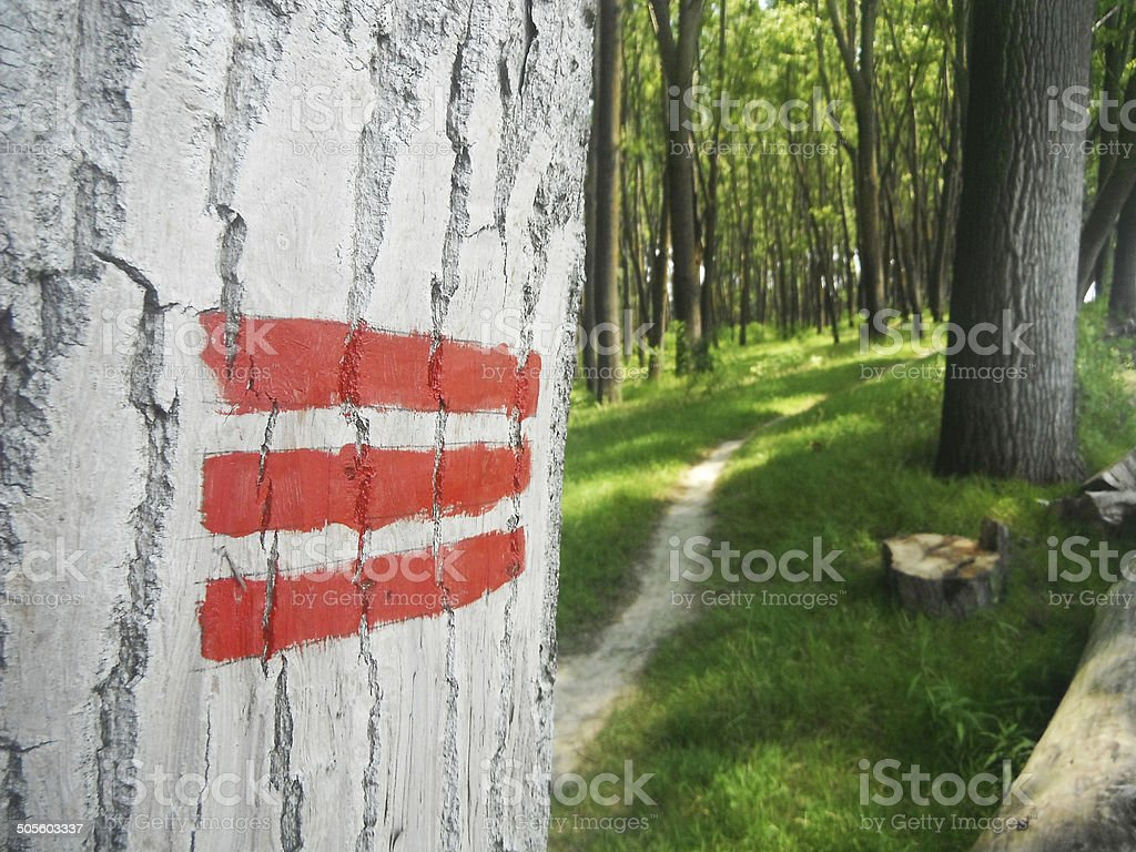 Scout sign in the woods stock photo