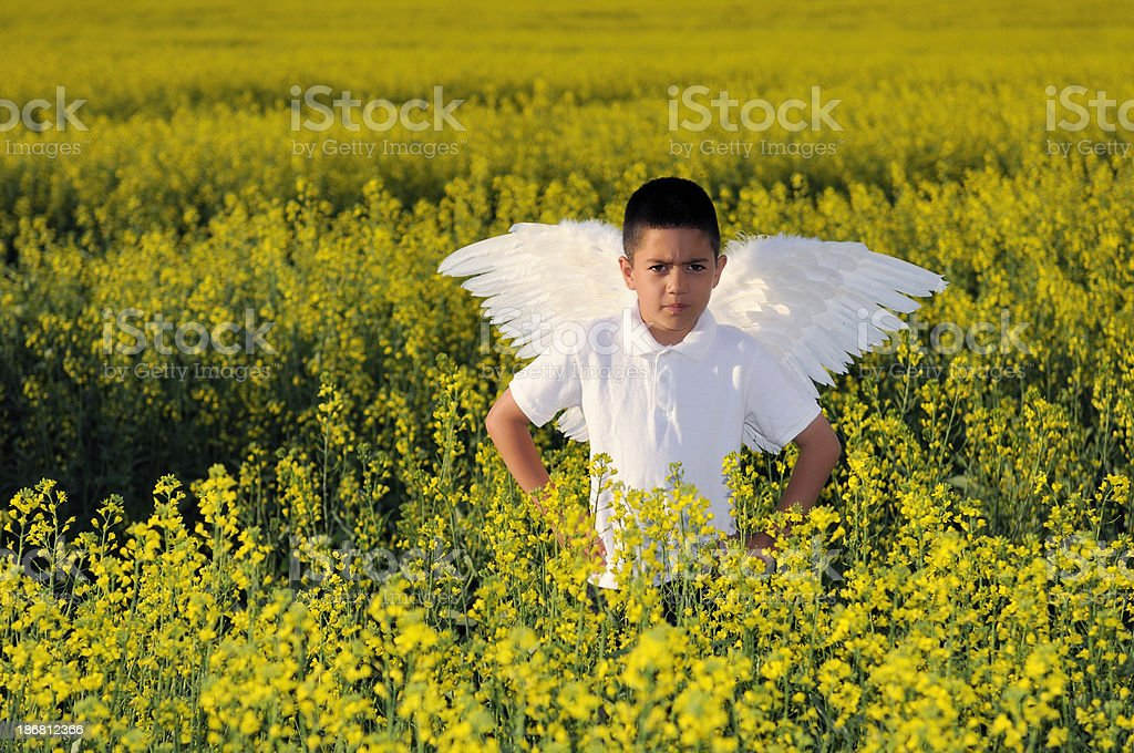 Scowling Angel Boy With Wings In Field Of Yellow Flowers stock photo