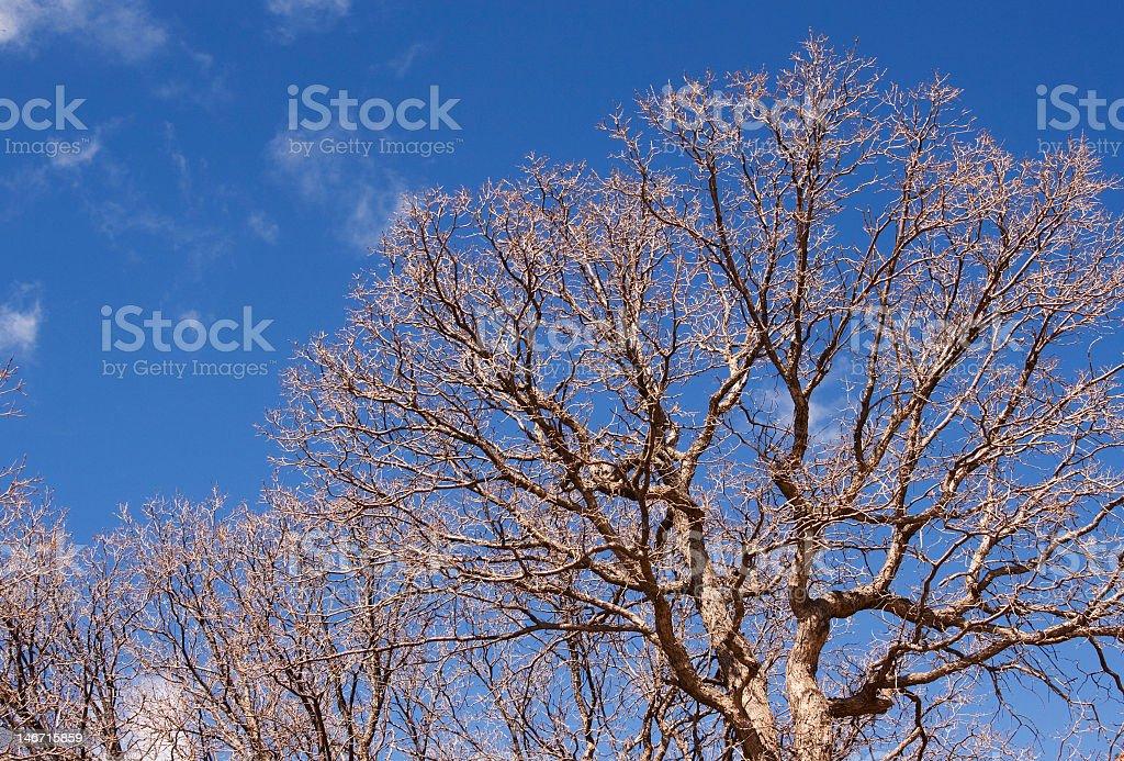 Scraggly Bare Tree stock photo