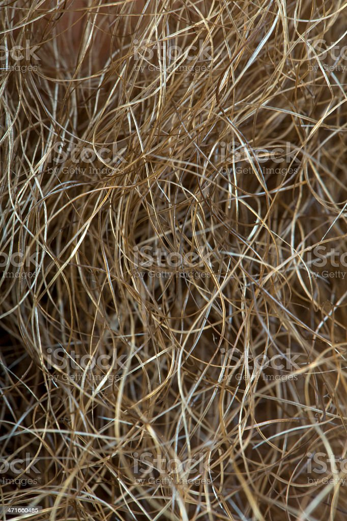 scraggly beard hairs stock photo