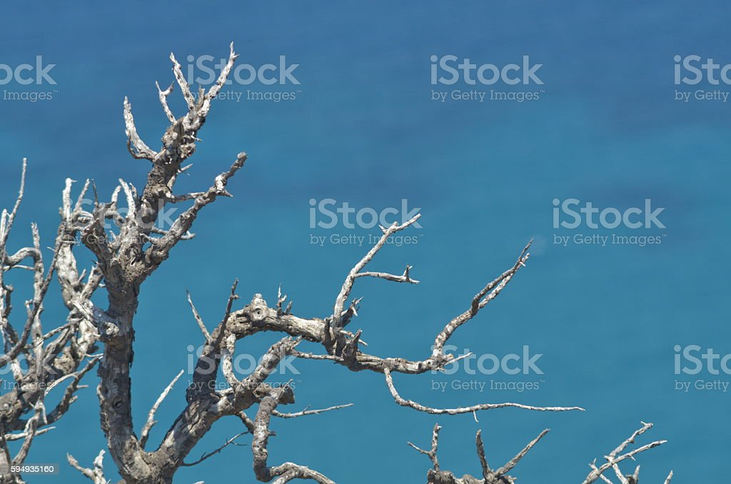 Scraggly dead tree branch with mediterranean blue sea in background stock photo