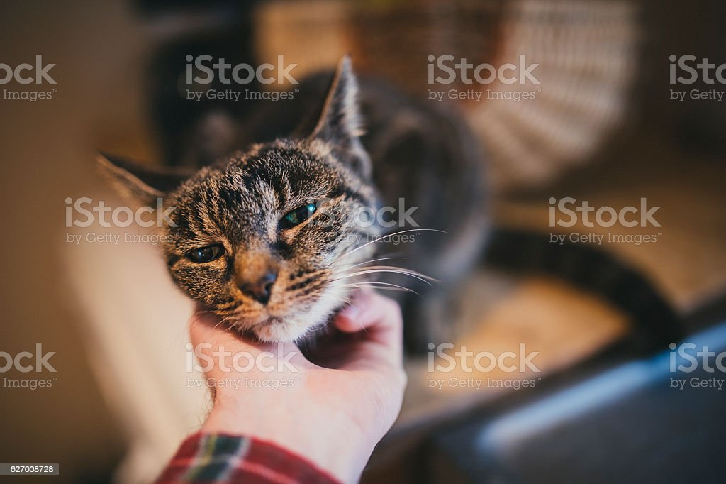POV Scratching a Cats Chin stock photo