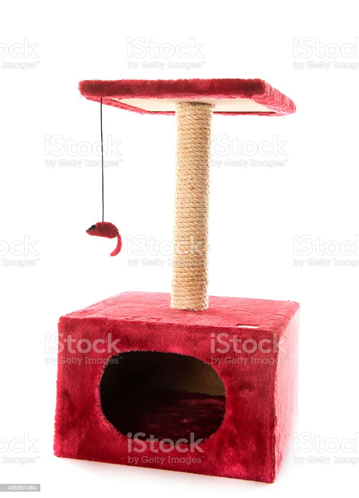 scratching post stock photo