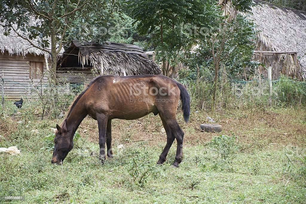 scrawny horse stock photo