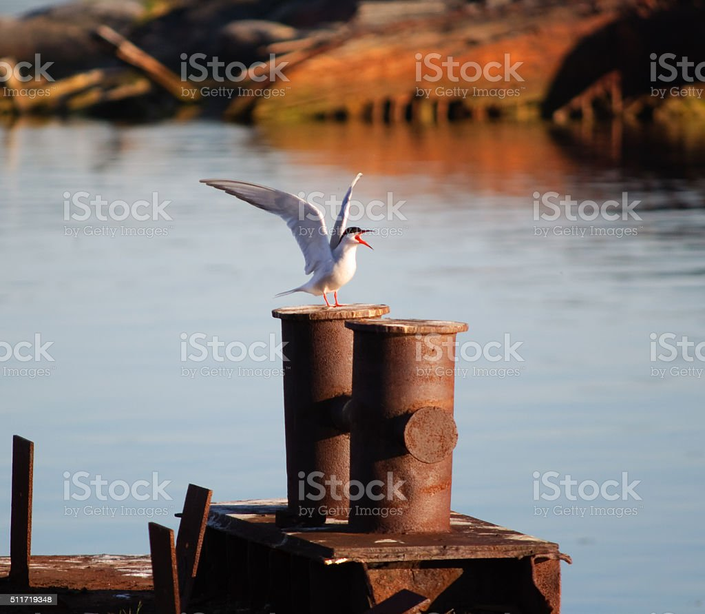 Screaming Seagull bollard on an abandoned pier stock photo