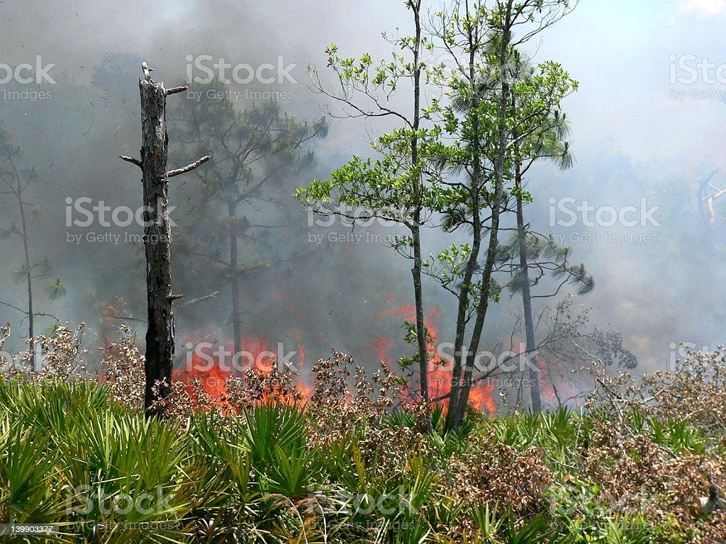 Scrub burn stock photo