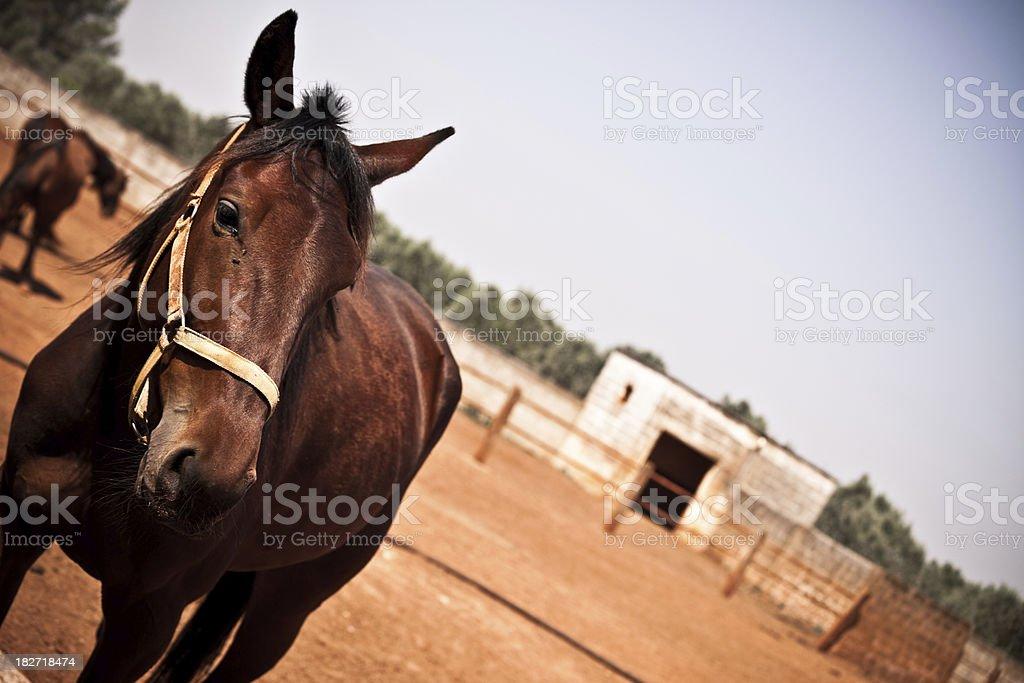 Scruffy Horse stock photo