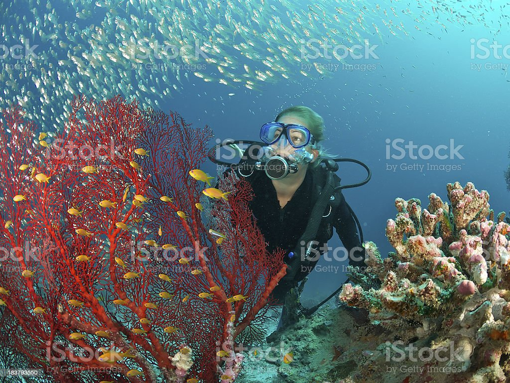 scuba diver admires fish and red fan coral stock photo