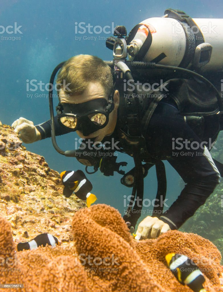 Scuba Diver at Koh Haa, Thailand, Happy In Nature Environment Watching Carpet Anemone (Stichodactyla gigantea) containing a Clark's Anemonefish (Amphiprion clarkii) Clownfish. stock photo