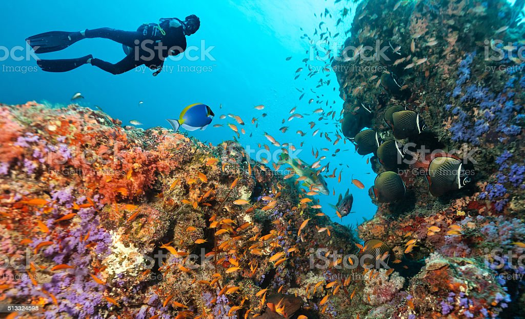 Scuba diver explore a coral reef stock photo