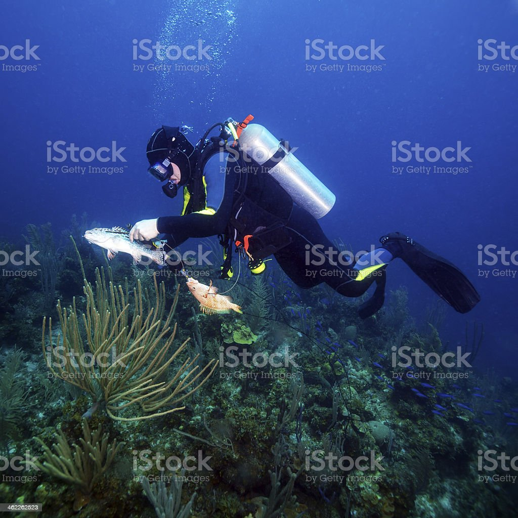 Scuba Diver Hunting Fishes stock photo