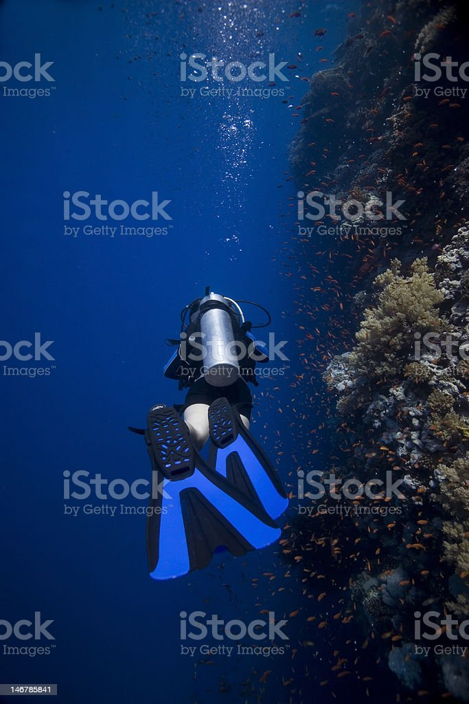 Plongée sous-marine dans la mer Rouge photo libre de droits