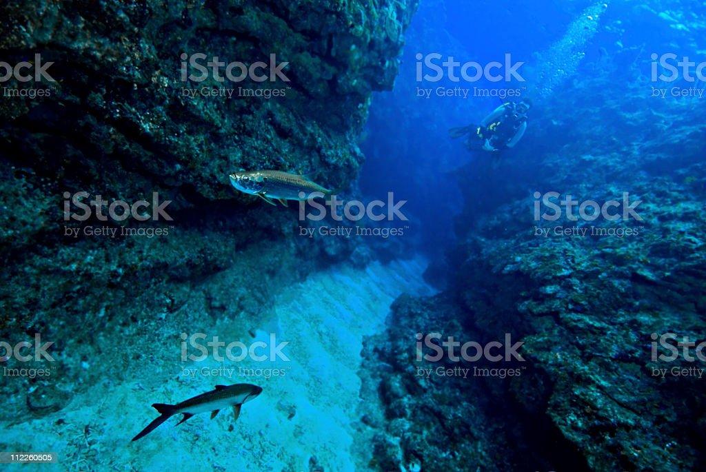 Scuba diver in underwater channel watching Tarpon stock photo