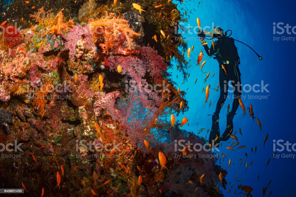 Scuba diver is exploring and enjoying Coral reef  Sea life red corals Sporting women Underwater photographer stock photo