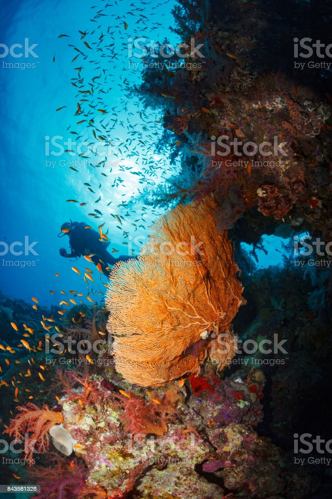 Scuba diver is exploring and enjoying Coral reef  Sea life  Sporting women Underwater photo stock photo