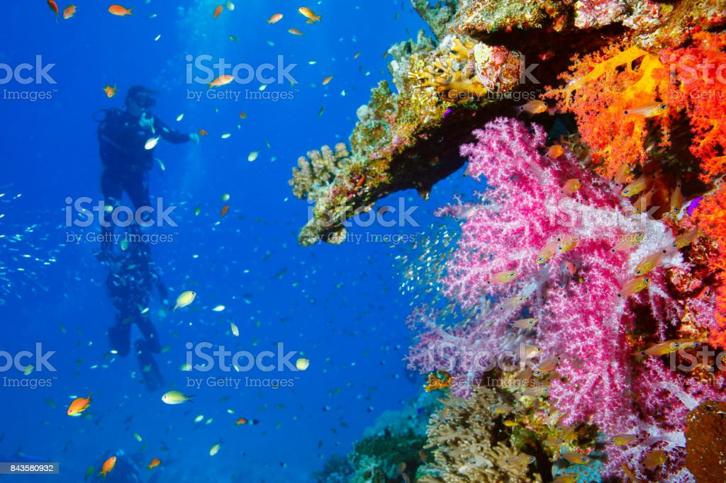 Scuba diver is exploring and enjoying Coral reef  Sea life   Underwater stock photo