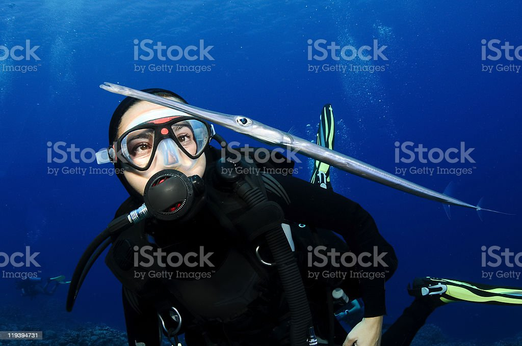 scuba diver looks at cornet fish royalty-free stock photo