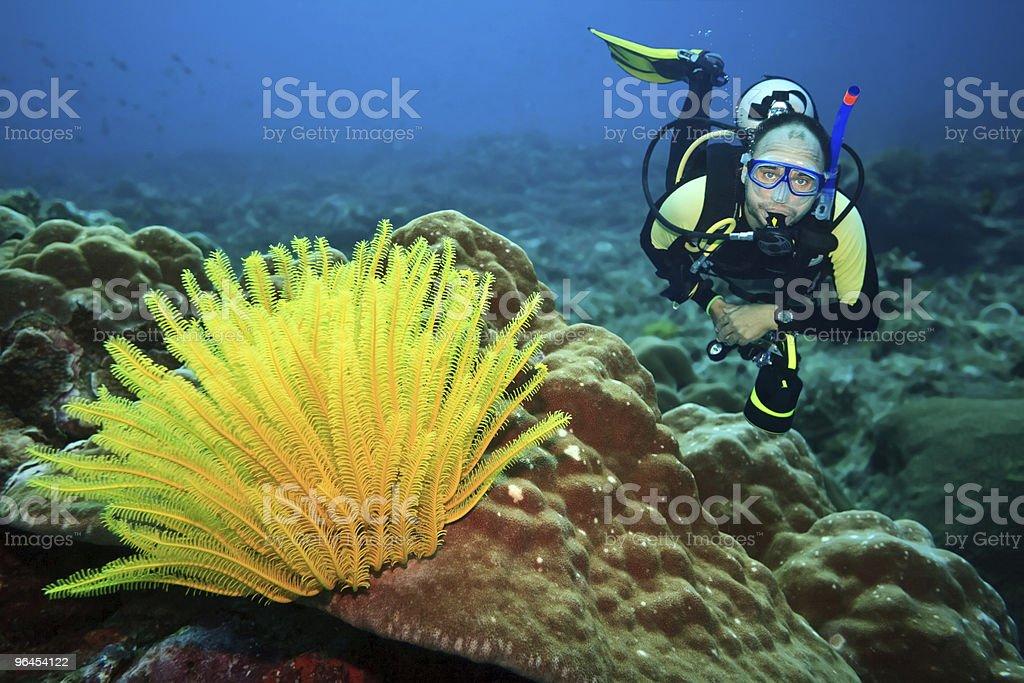 Scuba diver near bright yellow plant on the ocean floor stock photo