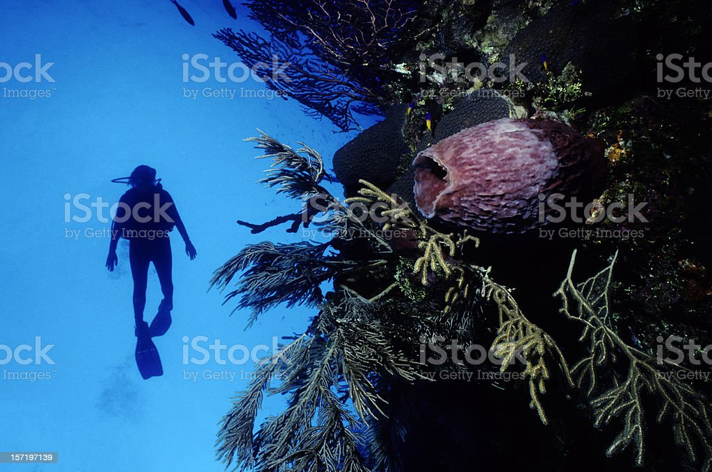Scuba Diver on Blue Wall royalty-free stock photo
