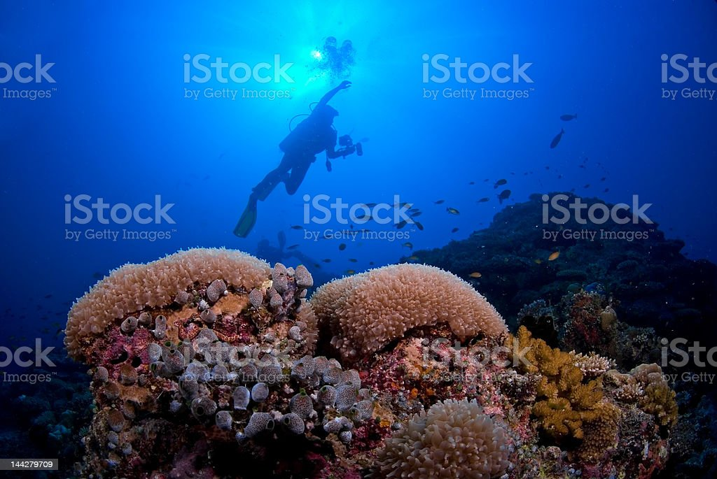 Scuba diver reaching for the surface stock photo