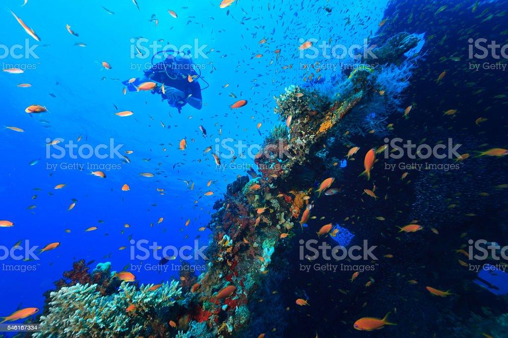 Scuba Diver   Shipwreck  coral colonies  School of red sea fish stock photo