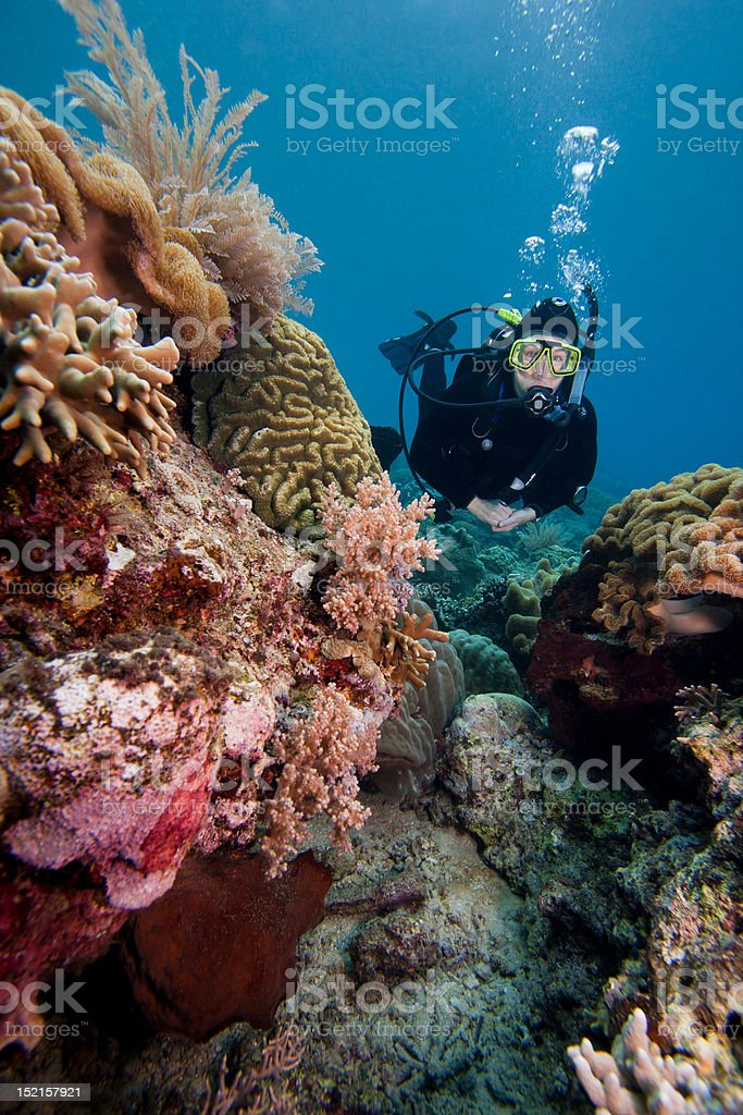 Scuba diver swimming over a tropical coral reef stock photo
