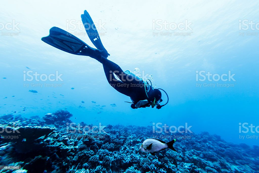 Scuba Diver Swimming Over Reef in Tiputa Pass stock photo