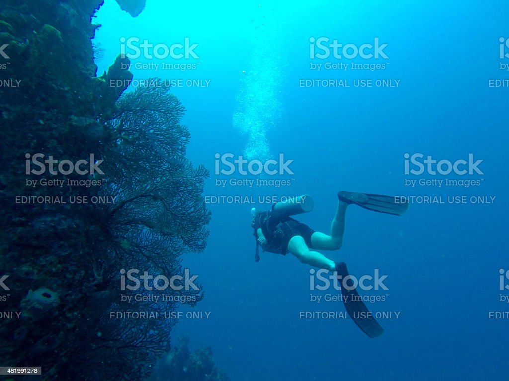 Scuba diver swimming passed coral stock photo
