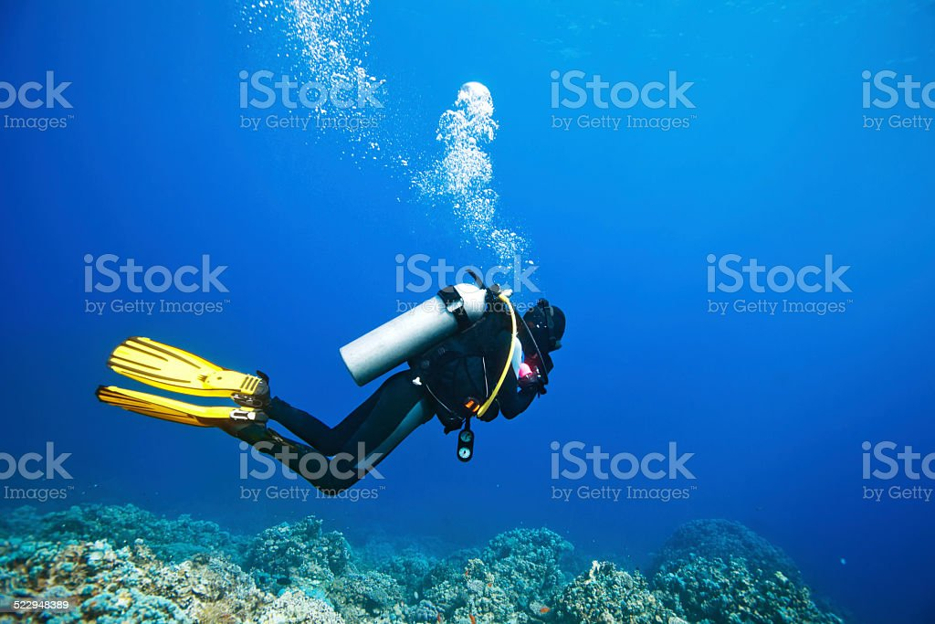 Scuba diver swimming under water and examines the seabed stock photo