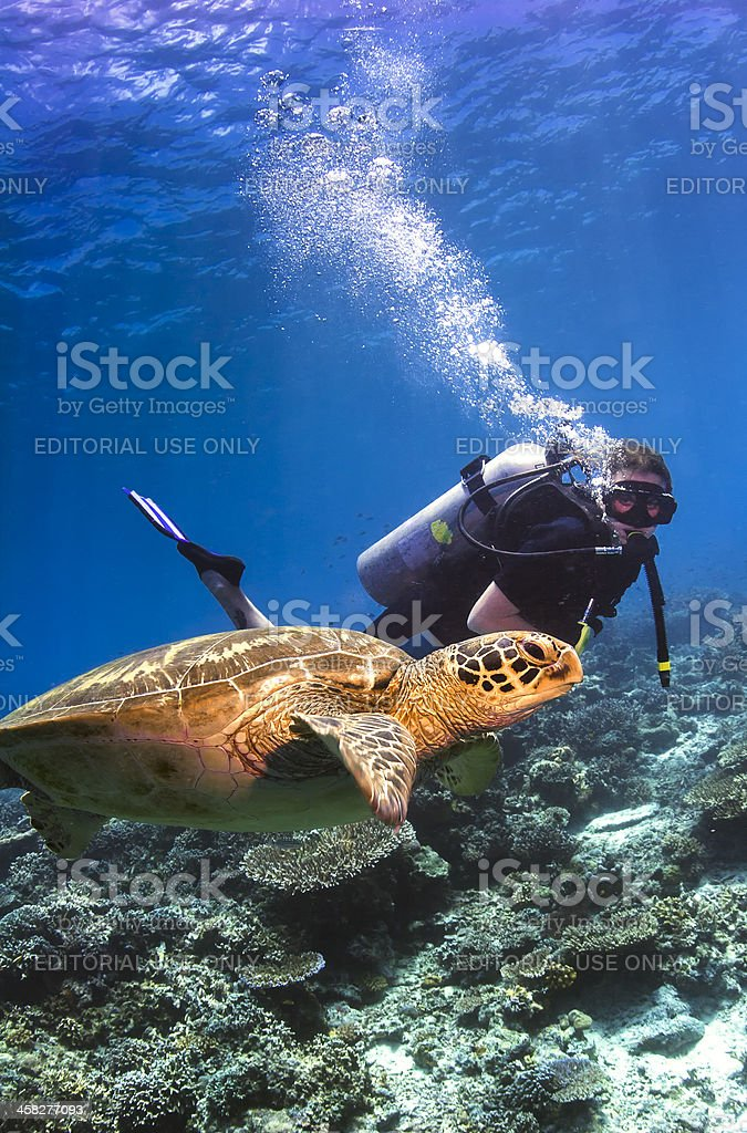 Scuba diver swimming with a Green Sea Turtle stock photo