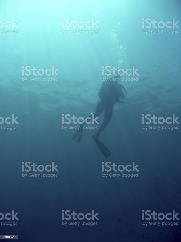 scuba diver underwater sipadan island royalty-free stock photo